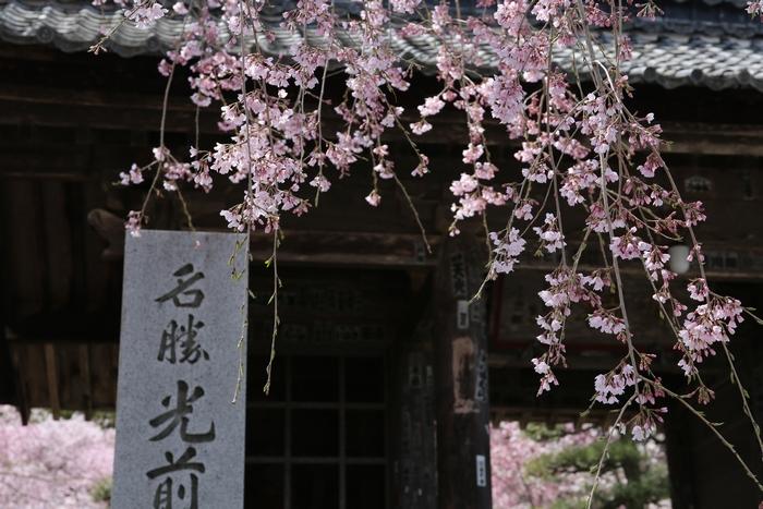 kozenji1404_01.jpg