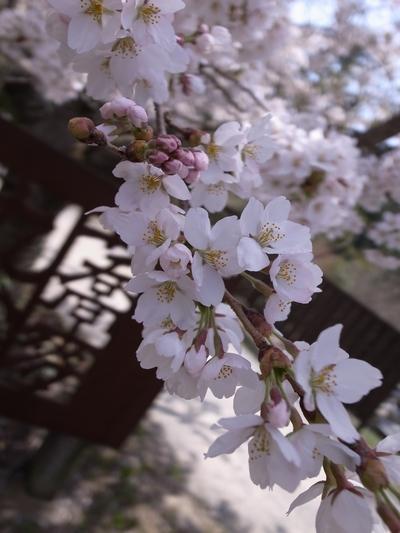 marutomi1404_01.jpg