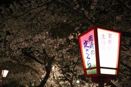 okazakisakura1404_01.jpg
