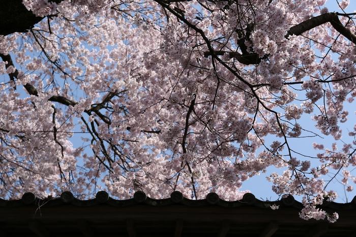 takato1404_08.jpg