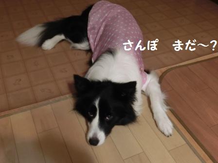 CIMG4627.jpg