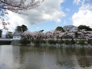 小田原城2014