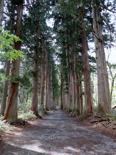 23 杉並木-001