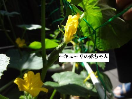002_convert_20140518210215.jpg