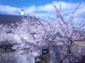桜220140405