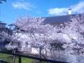 桜120140405