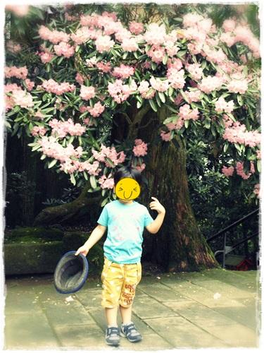 130522k flower