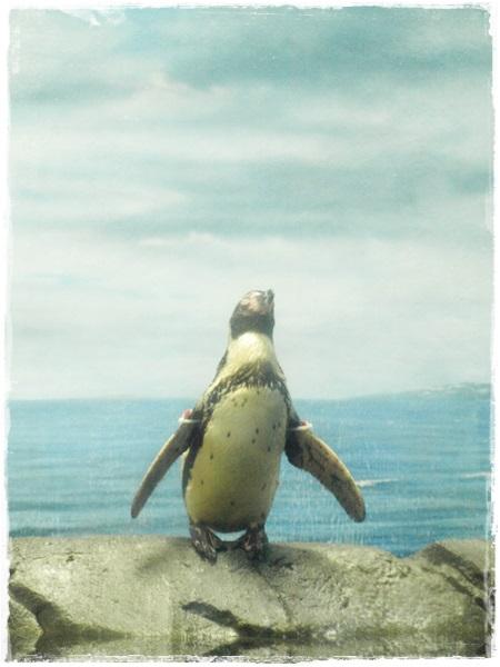 130614enosui8 penguin