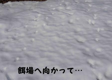 固い雪の上