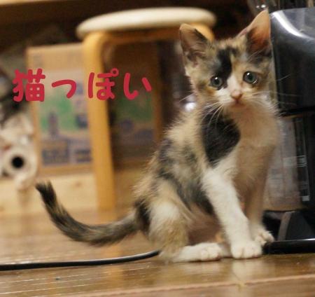 猫っぽいアニス