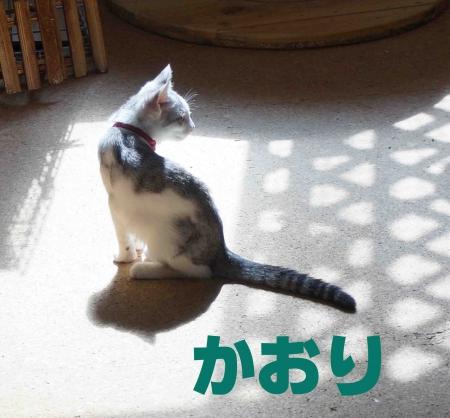 かおりちゃん
