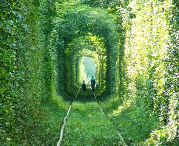 0226ウクライナ緑のトンネルを行く