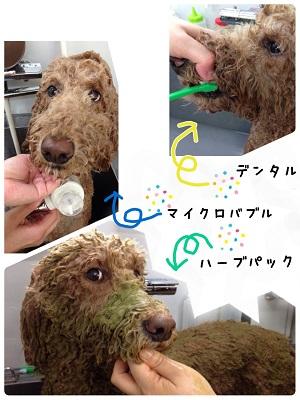 11_20140526191227eda.jpg