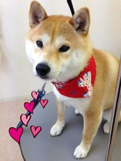 チビちゃん_convert_20140512230353