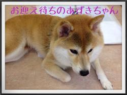 あーちゃん_convert_20140606222156