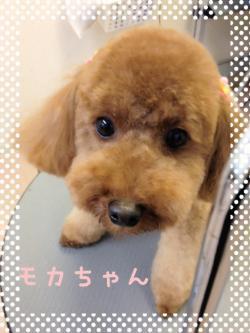 モカちゃん_convert_20140609225409