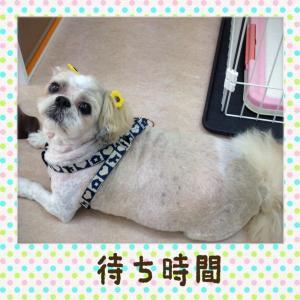 マル君_convert_20140720231018