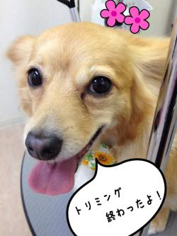 モカちゃん_convert_20140720225727