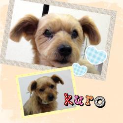 kuro_convert_20140410164702.jpg