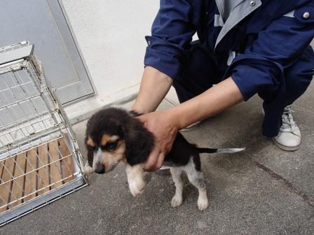 140824保護犬