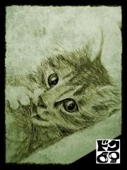 子猫20140831