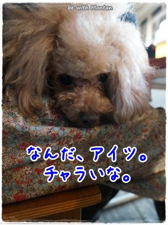 DSC00099-20140209.jpg