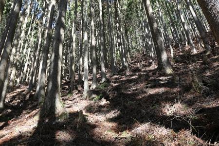 鹿島山へは樹林帯を急登