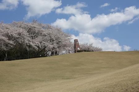 芝生の丘を行く