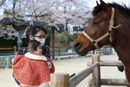 鞍ヶ池で初めて馬を見る