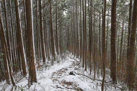 三ッ瀬コース合流後の樹林帯