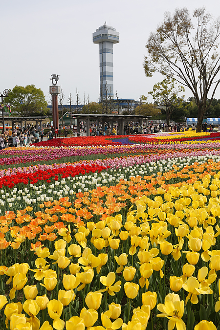 木曽三川公園のチューリップとタワー