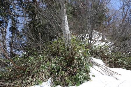 武尊山へ枝尾根を藪漕ぎして登る