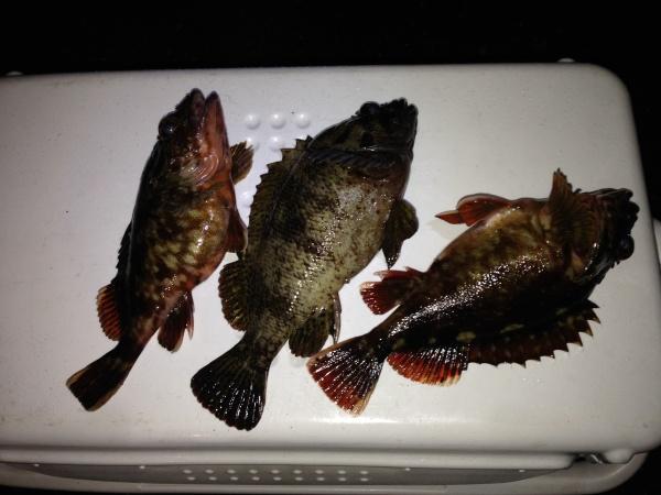 140301根魚4