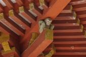 DSC00156猿
