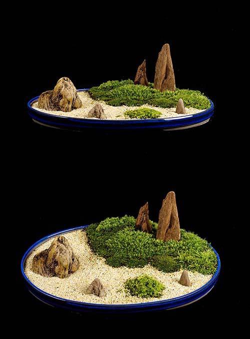 苔ー山水盆景#2