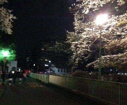 夜桜2014-14