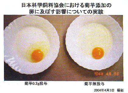 キクイモ添加飼料による鶏卵変化