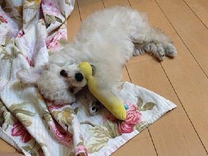 リリィ疎開16