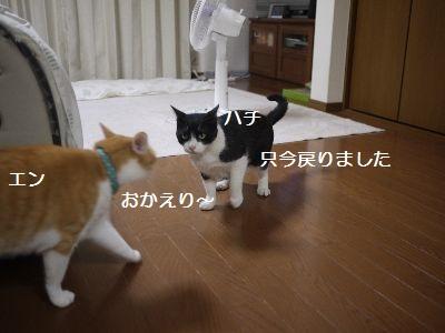 家で2 (1)