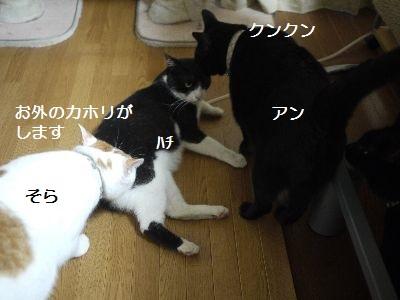 家で2 (2)