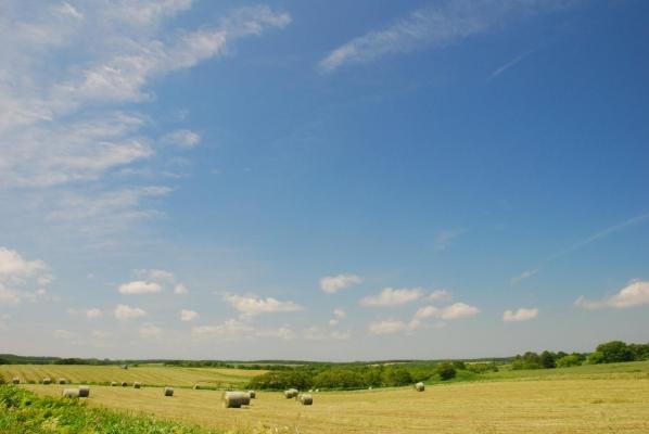 牧草ロールの季節デス