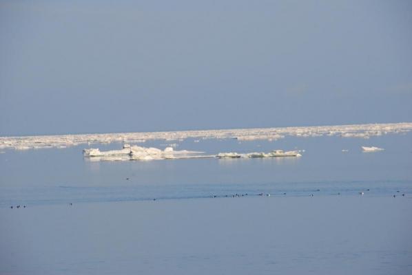 羅臼方面の流氷