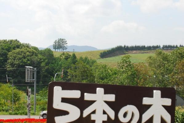 上富良野 5本の木