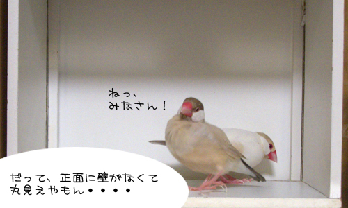 白い箱は別荘_6