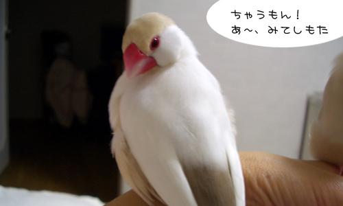 怖いよ~><_4