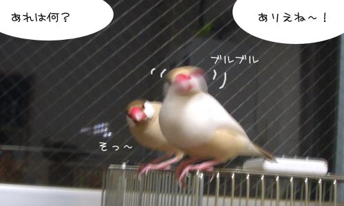 逃げろ_2