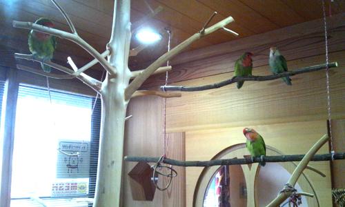木と小鳥のカフェ_2