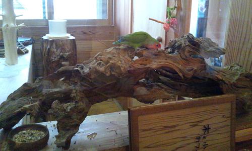木と小鳥のカフェ_6