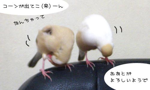 コーンが・・・_4
