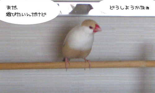練習中_2
